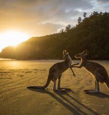 Kanganroo Australia